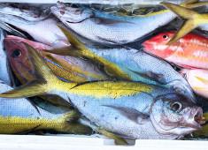 株式会社ゼウスクリエイト 求人 種子島近海で獲れた新鮮な魚介類をはじめ、四季折々の地元の厳選食材が揃います。