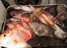 Lacco Ameno(ラッコアメーノ) 求人 △新鮮な鮮魚を使った料理も好評です!
