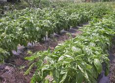 いたり家 求人 定期的に畑などにも出向き、生産者の声から学べます。