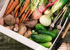 岡野延弘 ▲野菜は土壌がわかるものをつかっていきます。この素材選びから料理が始まっています。