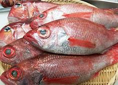 名舌亭 豊富な鮮魚を扱っているので、魚のの知識も自然と身に付きます!