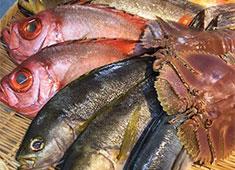 株式会社オフィスタナカ(ご当地飲食店プロジェクト事業部) 求人 つばき庵では毎日長崎直送鮮魚BOXを使用。魚の技術が身につきます。