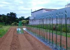 株式会社 四季の台所 求人 神奈川県・伊勢原市の自家農園では茄子やトマト、ピーマン、ベビーリーフなどを育てています。