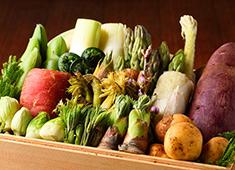 天ぷら 元吉(もとよし) 求人 野菜の瑞々しさや香りを活かすために、油の温度や衣の付け方を自在にコントロールする奥深き天ぷらの世界。