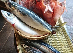 「やきとん てるてる」「おさかな てるてる」/合同会社 ブルイエ 求人 最近では、各店で魚メニューにも力を入れています