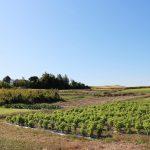 地域交流にも取り組む素敵な農場「マリノファーム」に行ってきた!